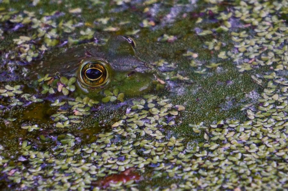 15. Frog. Washington D.C., United States